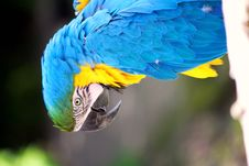 Free Colorful Macaw  Parrot Stock Image - 14200441