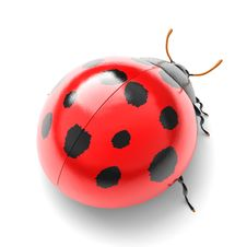 Free Ladybird Stock Photo - 14200670