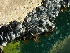 Free Shellfish Stock Photos - 14200783