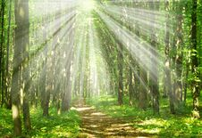Free Sunlight Stock Images - 14201244