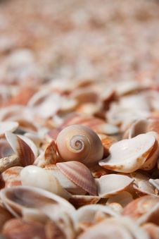 Free Shells Stock Image - 14201811