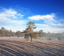 Free Tree In Field Royalty Free Stock Image - 14202286