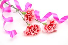 Pink Carnations Stock Photography
