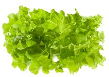 Free Green Salad Royalty Free Stock Photos - 14202788