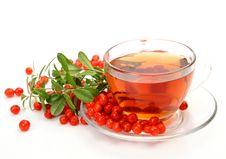 Free Tea In A Mug Royalty Free Stock Photo - 14203445