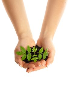 Free Young Plant In Woman Hands Stock Photo - 14203870