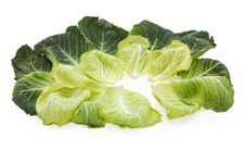 Free Cradle From Cabbage Leaves Royalty Free Stock Photo - 14203925