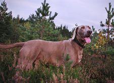 Free Dog Stock Images - 14205644
