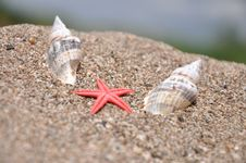 Free Sea Stars Between The Two Shells Royalty Free Stock Images - 14207829