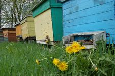 Beehives In Springtime Royalty Free Stock Photos