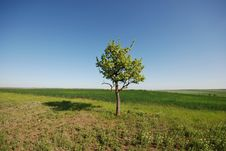 Free Lonely Tree In Field Stock Images - 14208044