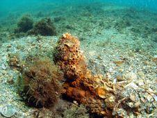 Free Coral Mound Stock Photos - 14208173