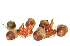 Free Acorns And Maple Leaves. Royalty Free Stock Image - 14208246