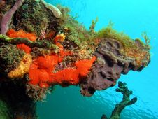 Free Coral Mound Stock Images - 14208254