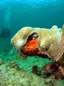 Coral Design With Diver Stock Image