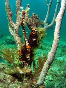 Free Damaged Coral Royalty Free Stock Photo - 14208405