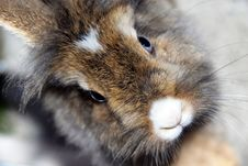 Free Rabbit Stock Images - 14208754