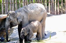 Free Mother And Baby Elephant Royalty Free Stock Images - 14209029