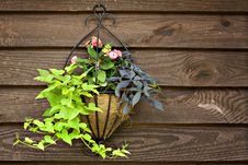 Free Plant Hanger On Rustic Wood Stock Photo - 14209310