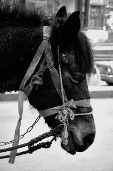 Free Tired And Sad Horse In Beijing Stock Images - 14209744