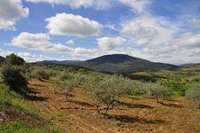Free Campos De Olivos Y Cerezos Royalty Free Stock Photo - 142088475