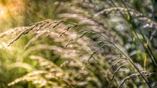 Free Grass, Bokeh And A Litle Beam Of Sunlight Stock Photography - 142088482