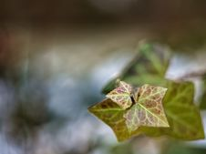 Free Winter Leaves Stock Images - 142088504