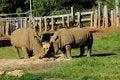 Free Couple Rhinos Stock Images - 14217624