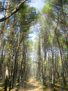 Free Forest Royalty Free Stock Photos - 14219308