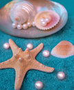 Free Pearls And Shells Stock Photography - 14219982