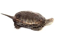 Free Turtle Stock Images - 14210264
