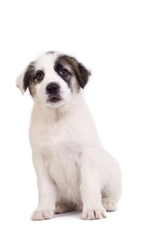 Free Puppy Stock Photography - 14213082