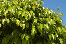Free Green Plants In Mexico Royalty Free Stock Photo - 14213365