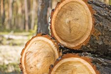 Free Logs Stock Photo - 14213600