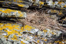 Free Seabirds Nest. Royalty Free Stock Image - 14213686