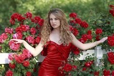Free Beautiful Female White Model With Red Roses Royalty Free Stock Photography - 14215047
