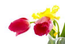 Free Tulips Royalty Free Stock Photo - 14216205