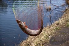 Free Catching Pike Fish With Tackle Royalty Free Stock Photos - 14217428