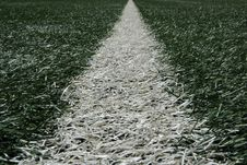 Free White Line Of Turf Stock Photography - 14217852