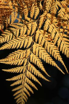 Free Fern Leaves Royalty Free Stock Photos - 14218418