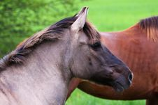 Free Horse Stock Images - 14218424