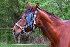 Free Horse Royalty Free Stock Images - 14218459