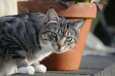 Free Cat Looking Royalty Free Stock Image - 14218796