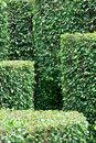 Free Pattern Composed By Garden Plant Stock Image - 14223121