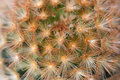 Free Cactus Texture Stock Photography - 14226992
