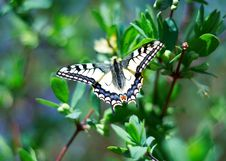 Free Insect Butterfly With Wings Royalty Free Stock Photo - 14220325