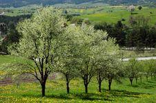 Free Spring Blooming, Wonderful Intense Colors 2 Royalty Free Stock Image - 14220496