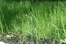 Free Grass Stock Photos - 14220653