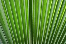 Free Branch Of A Palm Stock Images - 14221284