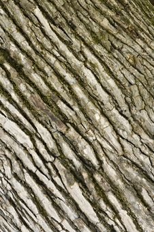 Free Mossy Tree Bark Background Stock Photography - 14222202